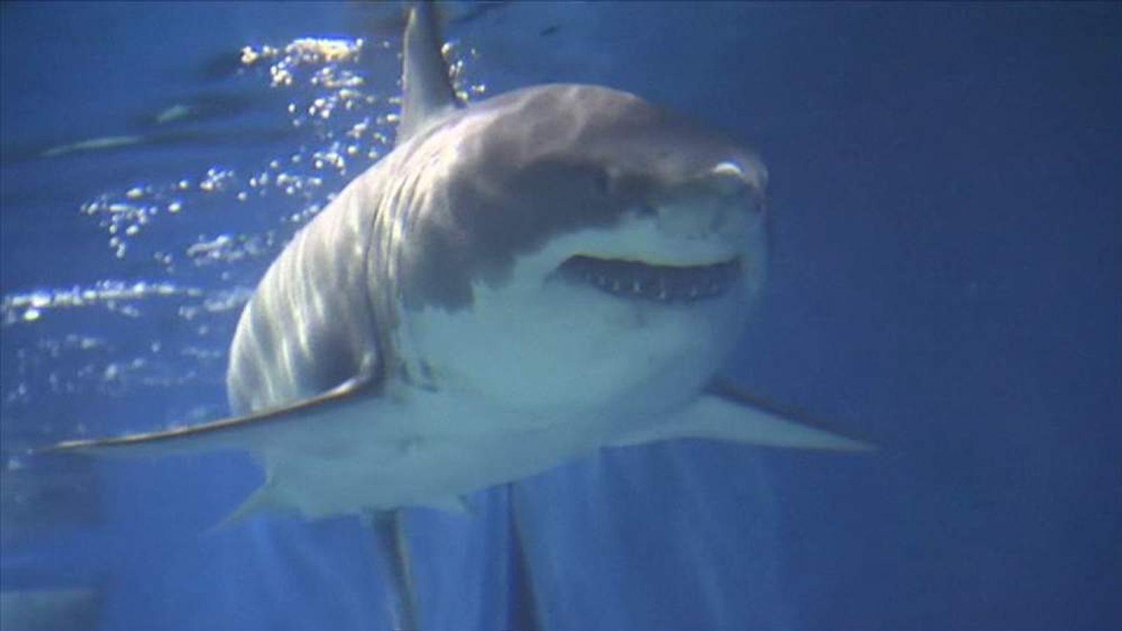 Great White Dies Three Days In Aquarium