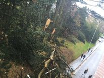 Trees have been torn down in Aberystwyth after hurricane-force winds hit the town