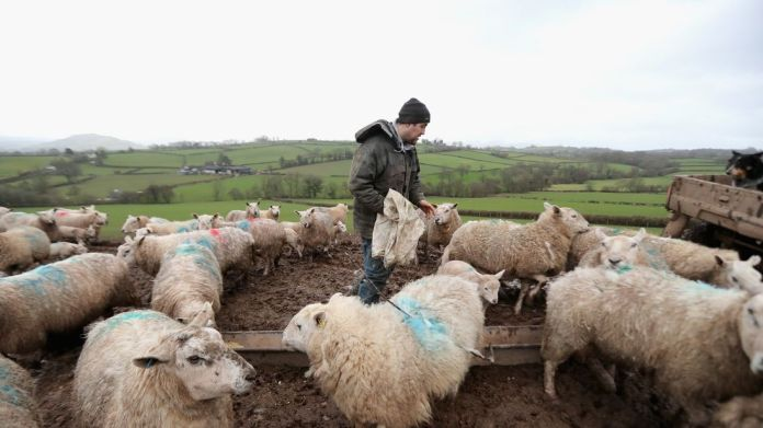 Farmer Paul Brute feeds lambs and ewes on Gwndwnwal Farm during lambing season Irish PM Leo Varadkar calls for 'real detail' from Theresa May on Brexit Irish PM Leo Varadkar calls for 'real detail' from Theresa May on Brexit skynews wales lamb brecon 4237430