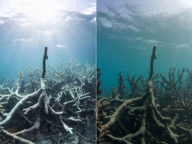 The Great Barrier Reef's Lizard Island, before and after the effects of pollution. Pic: The Ocean Agency