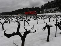 Vineyards in Meounes-les-Montrieux, southern France Ireland on red alert as 'extraordinary' storm approaches Ireland on red alert as 'extraordinary' storm approaches skynews europe snow france 4243822