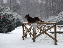 A dog jumps off a wooden fence in Sempione garden after snowfall in Milan, Italy Ireland on red alert as 'extraordinary' storm approaches Ireland on red alert as 'extraordinary' storm approaches skynews europe snow italy 4243817