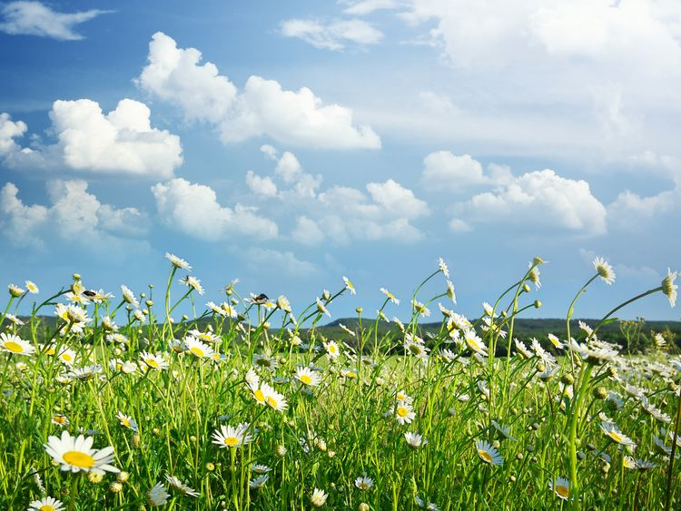 Grass pollen is the worst culprit for causing hay fever symptoms