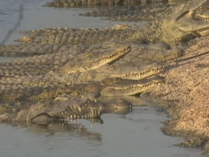 It is feared that their escape could spark an 'international incident'  Growing fears that stranded crocodiles may spark an 'international incident' skynews crocodile jordan valley 4384751