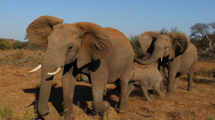 The illegal wildlife trade is worth an estimated £15bn according to WWF
