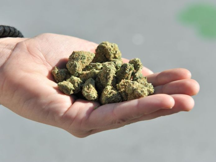 A woman holds a handful of marijuana flower buds. File pic