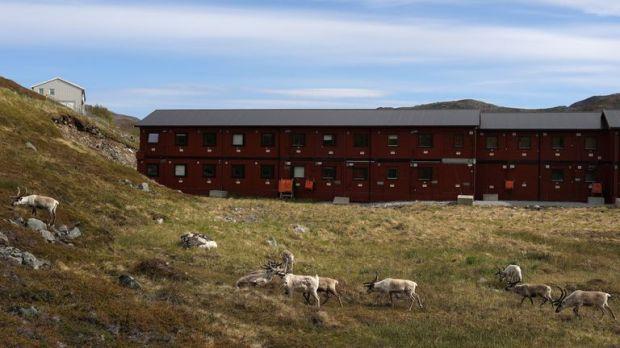 Reindeer graze near a building in Hammerfest, Norway, June 14, 2018.