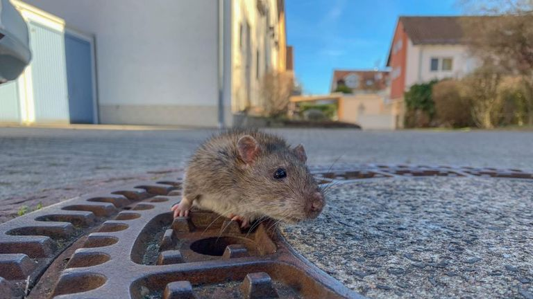 Some social media users questioned why taxpayers' money was spent on saving the rat