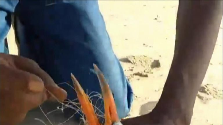 A Caspian turn was struggling to fly after becoming entangled in nylon fishing net was and set free thanks to a helping hand.