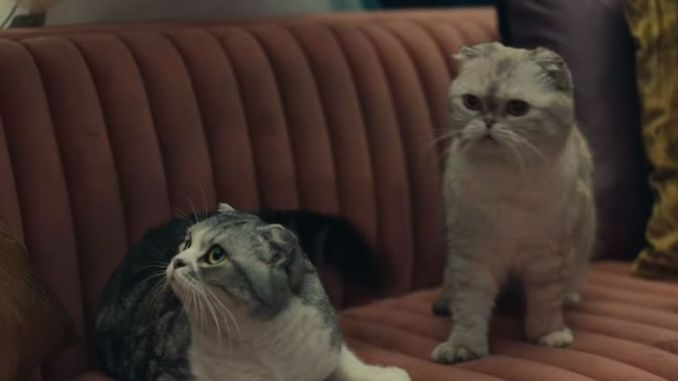 Screengrab from Taylor Swift video ME!. Pic: Taylor Swift/YouTube