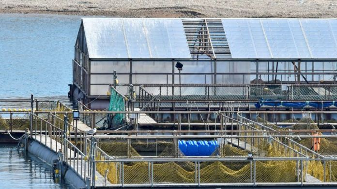 A view of the enclosures with nearly 100 whales held captive