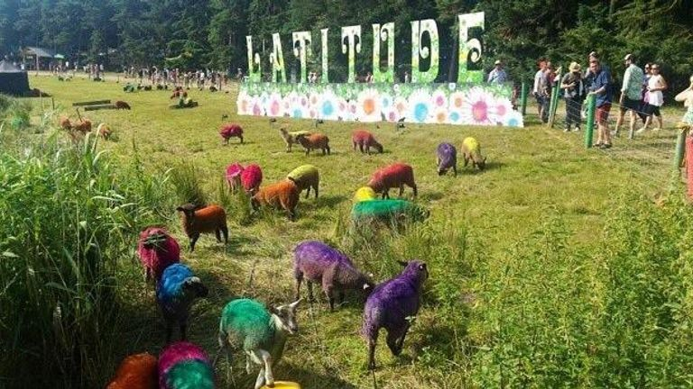 The sheep in 2015, dyed multi colours. Pic: Lottie Mills