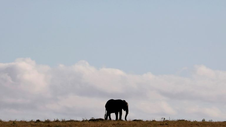 An elephant walks through the Maasai Mara National Reserve, Kenya