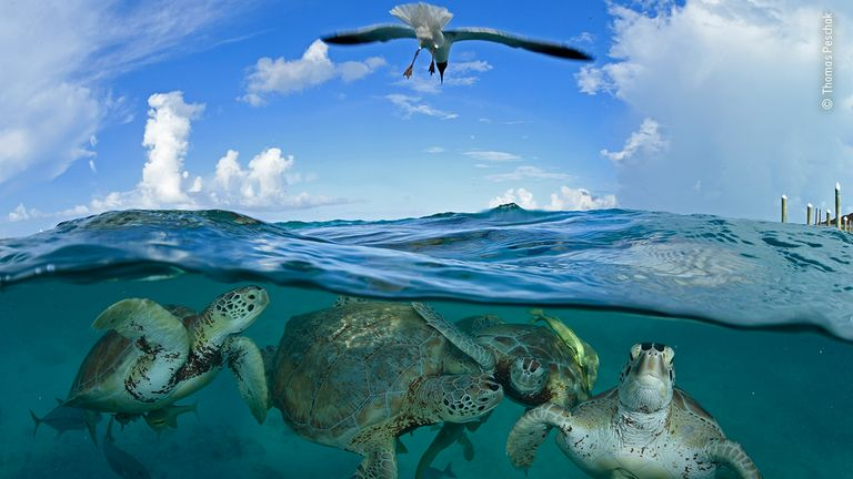 Turtle Time Machine von Thomas Peschak, Deutschland / Südafrika