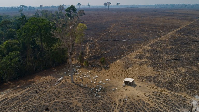 Conservationists warn that the new law could accelerate the destruction of the rainforest. Image: AP