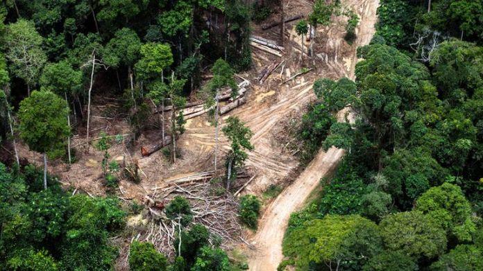 Aerial view of peatland forest at Lokolama/Penzele around Mbandaka, Democratic Republic of the Congo. Pic: Daniel Beltrá / Greenpeace