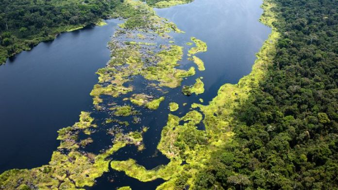 Aerial view of Monboyo River and peatland forest of Salonga National Park south-east of Mbandaka, Democratic Republic of the Congo. Pic: Daniel Beltrá / Greenpeace