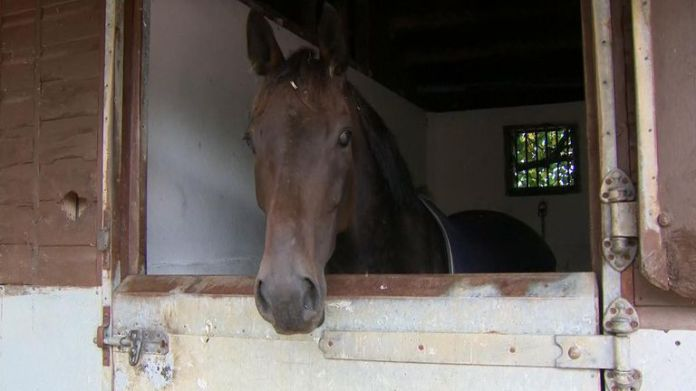 The hope is that National Racehorse Week will become an annual event