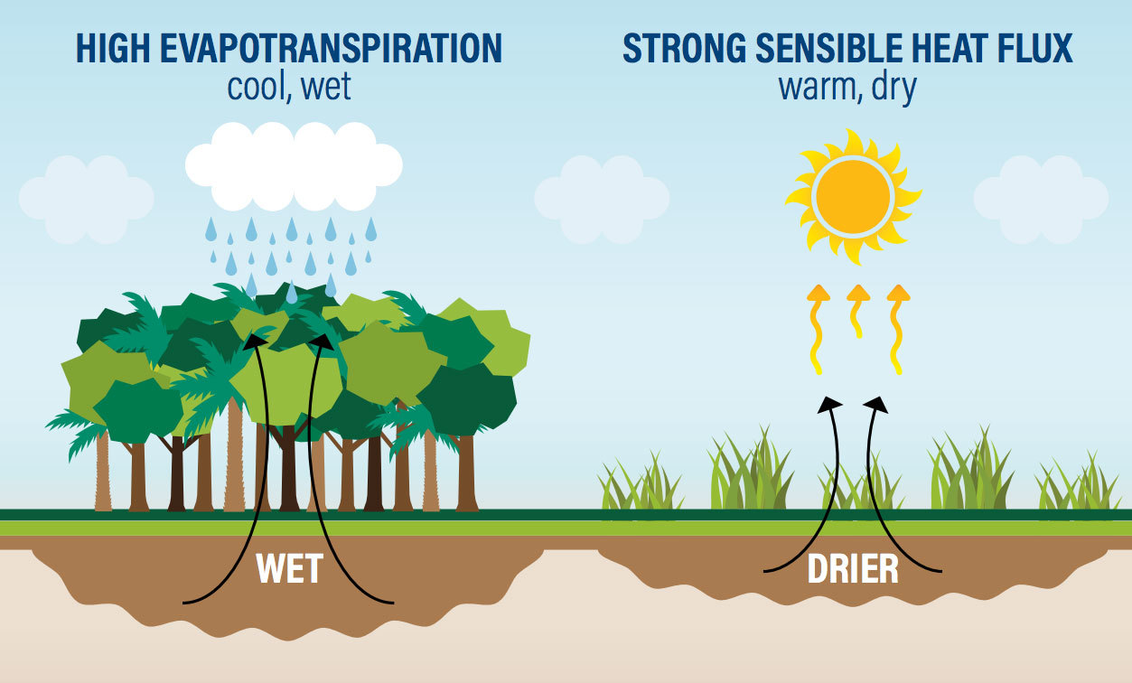 hight resolution of trees pull water from the ground and release water vapor through their leaves generating atmospheric