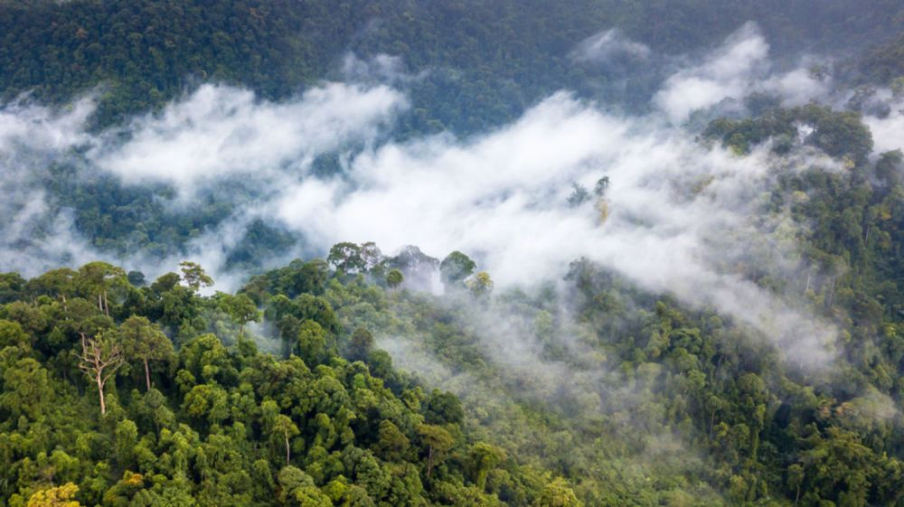 medium resolution of moisture produced by the world s forests generates rainfall thousands of miles