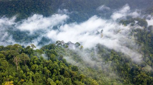 small resolution of moisture produced by the world s forests generates rainfall thousands of miles