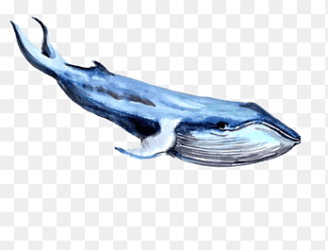 Right Whales png images PNGEgg