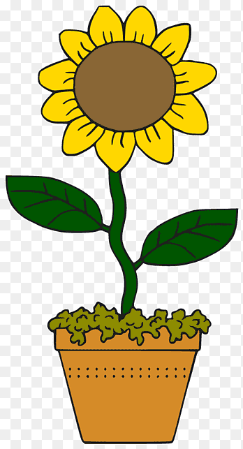 Sunflower Cartoon Drawing : sunflower, cartoon, drawing, Common, Sunflower, Cartoon, Drawing,, Comics,, PNGEgg