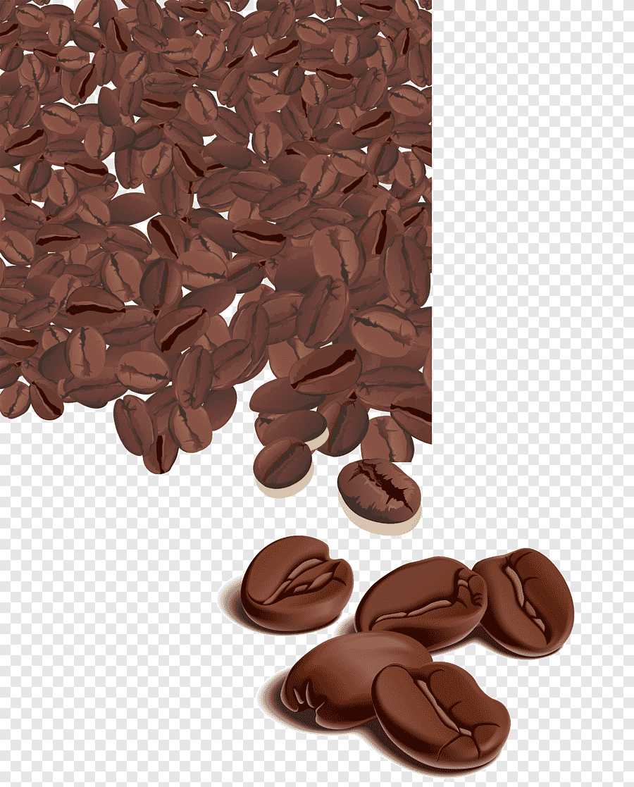 Vector Biji Kopi : vector, Arabica, Coffee, Bean,, Beautiful, Beans,, Vector,, Perfume, PNGEgg