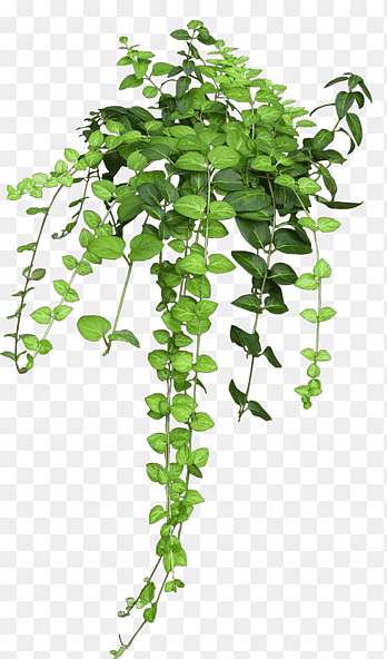 Plant Top View Png : plant, Shrub,, View,, Green, Leafed, Tree,, Leaf,, Branch, PNGEgg