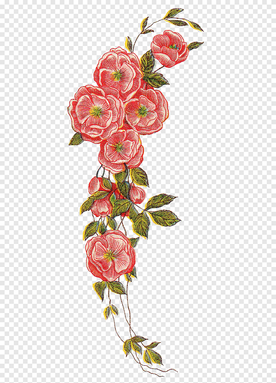 Vintage Bunga Png : vintage, bunga, Flowers, Illustration,, Flower,, Vintage, File,, Flower, Arranging,, Heart, PNGEgg