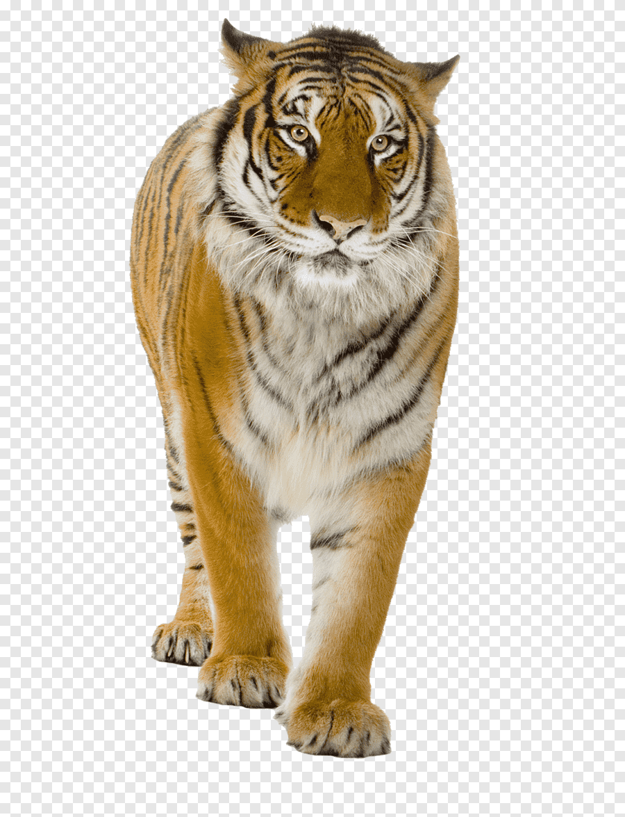 Menyimpan Format Gambar PNG di Photoshop - YouTube