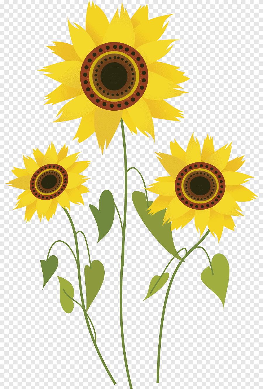 Sunflower Cartoon Drawing : sunflower, cartoon, drawing, Common, Sunflower, Drawing, Computer, File,, Cartoon, Flowers,, Sunflower,, PNGEgg