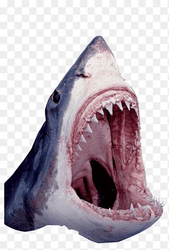 Ikan Segar Png : segar, Negara, Serangan, Rahang, PNGEgg