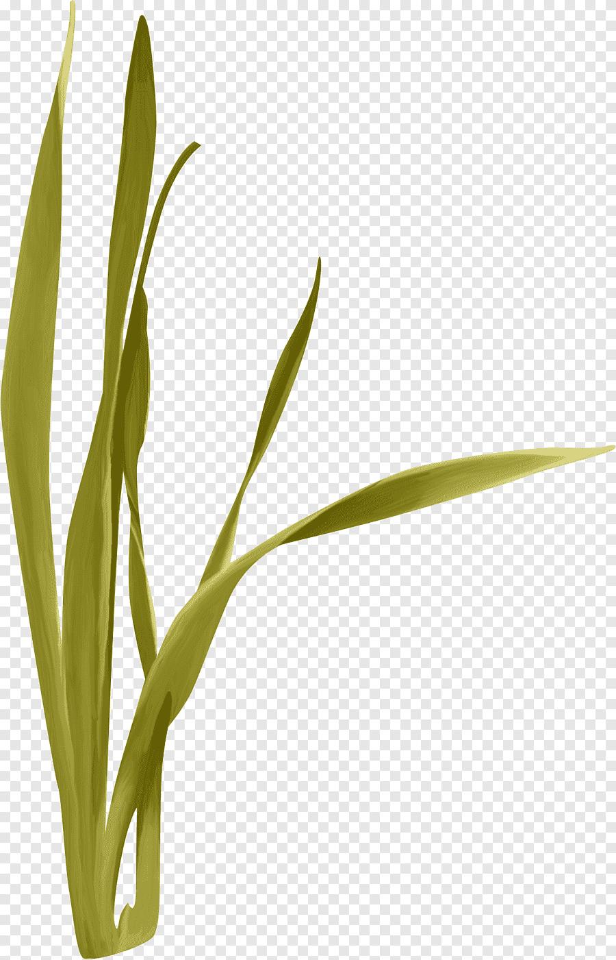 Cartoon Grass Png : cartoon, grass, Computer, File,, Grass,, Leaf,, Cartoon, Grass, PNGEgg