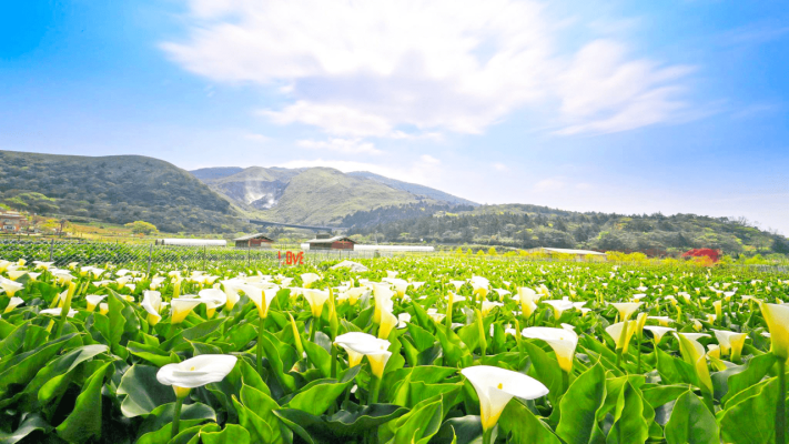 竹子湖 | 台北熱門景點推薦