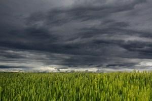Sturmwolken über einem Feld - Extremwetter in Deutschland