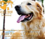 GREAT Rescue's 2012 Calendar coming soon