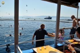 EAFP post-conference visit to Tuna farm in Brač island