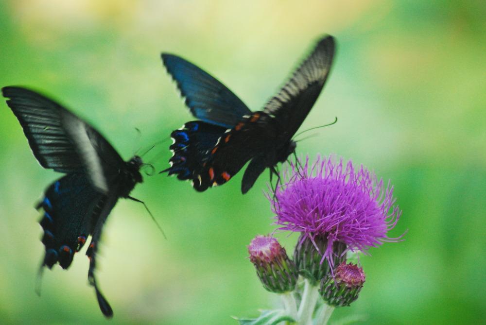 Hampyeong ButterflyFestival