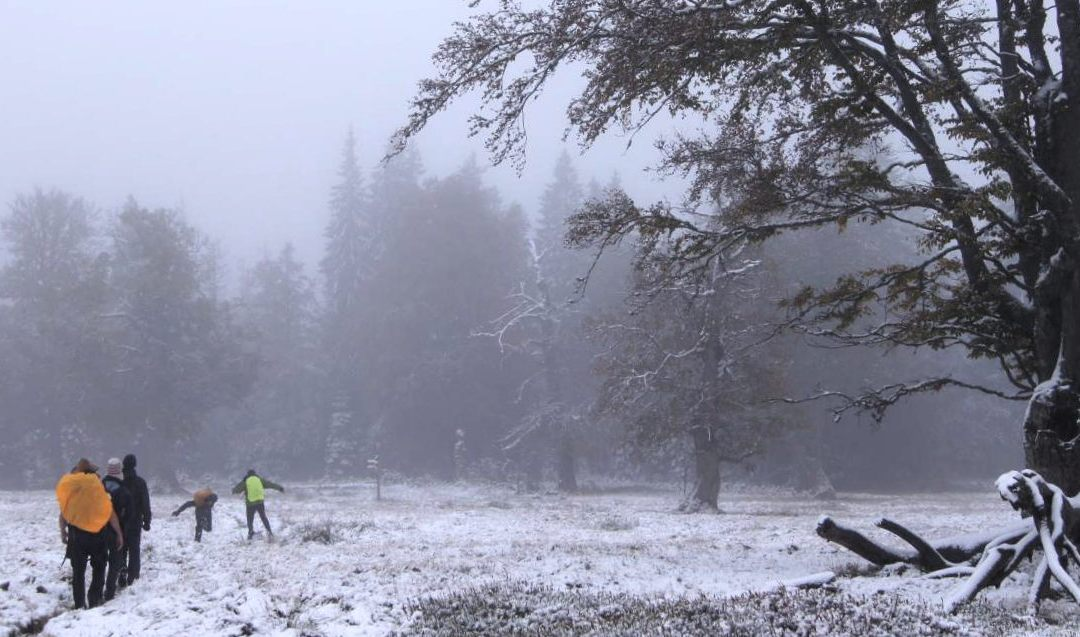 field course on remote sensing in the Bavarian Forest NP