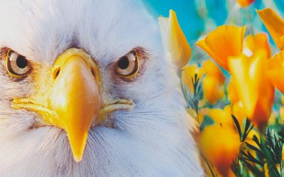Eagle Crusher Company Updates – May 2021