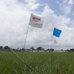 Flags were placed in the field where the future portables will be placed.