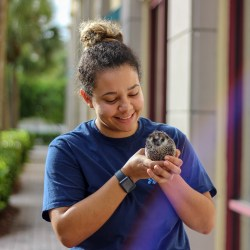 Senior Farrah Nickerson holds her breeding male hedgehog, Sopranino, on a walk around the city. Portraits by Nyan Clarke