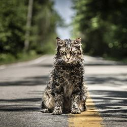 "Image still from the remake of, ""Pet Sematary."" (Paramount/TNS)"