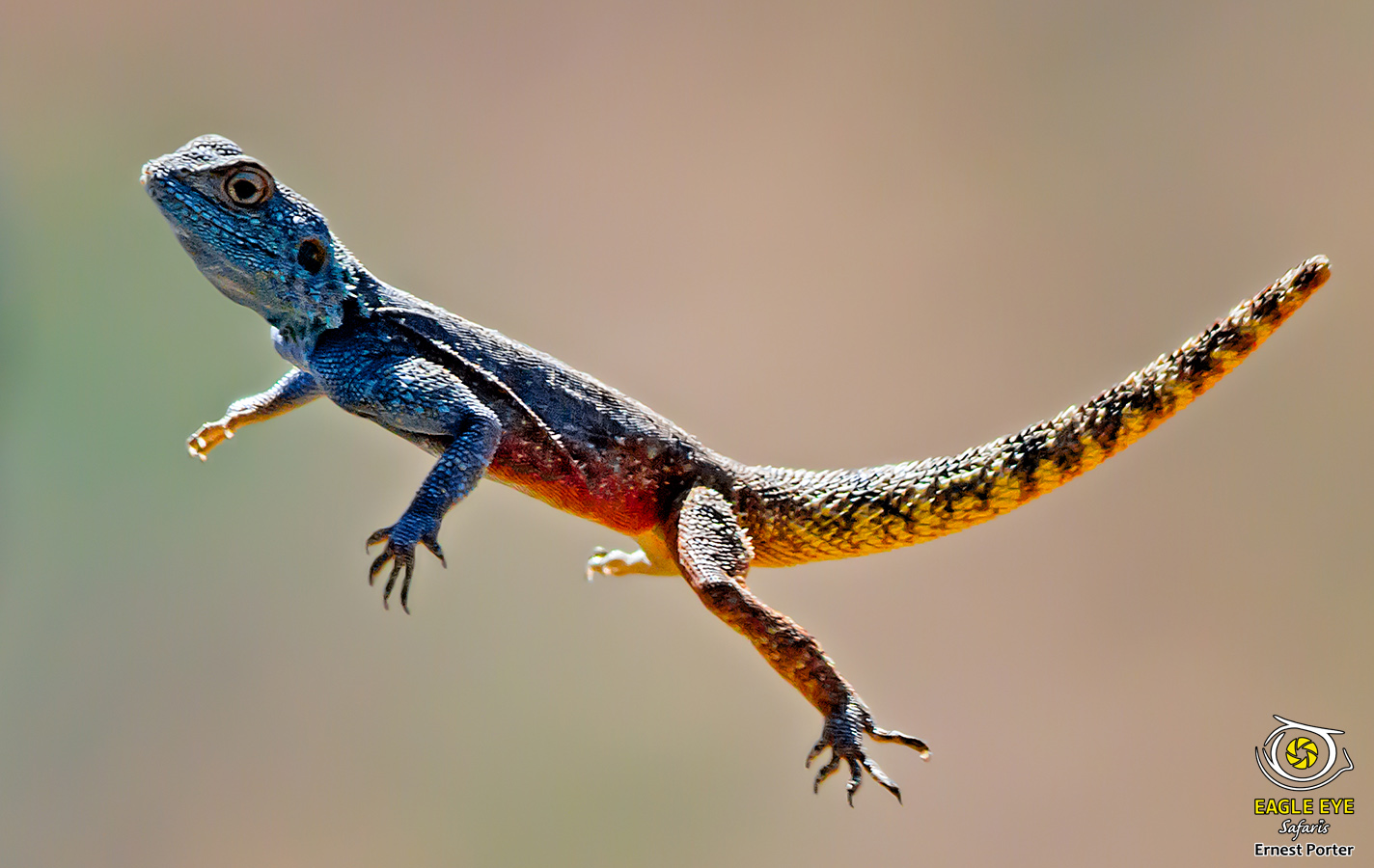 The Jump (Southern Rock Agama)