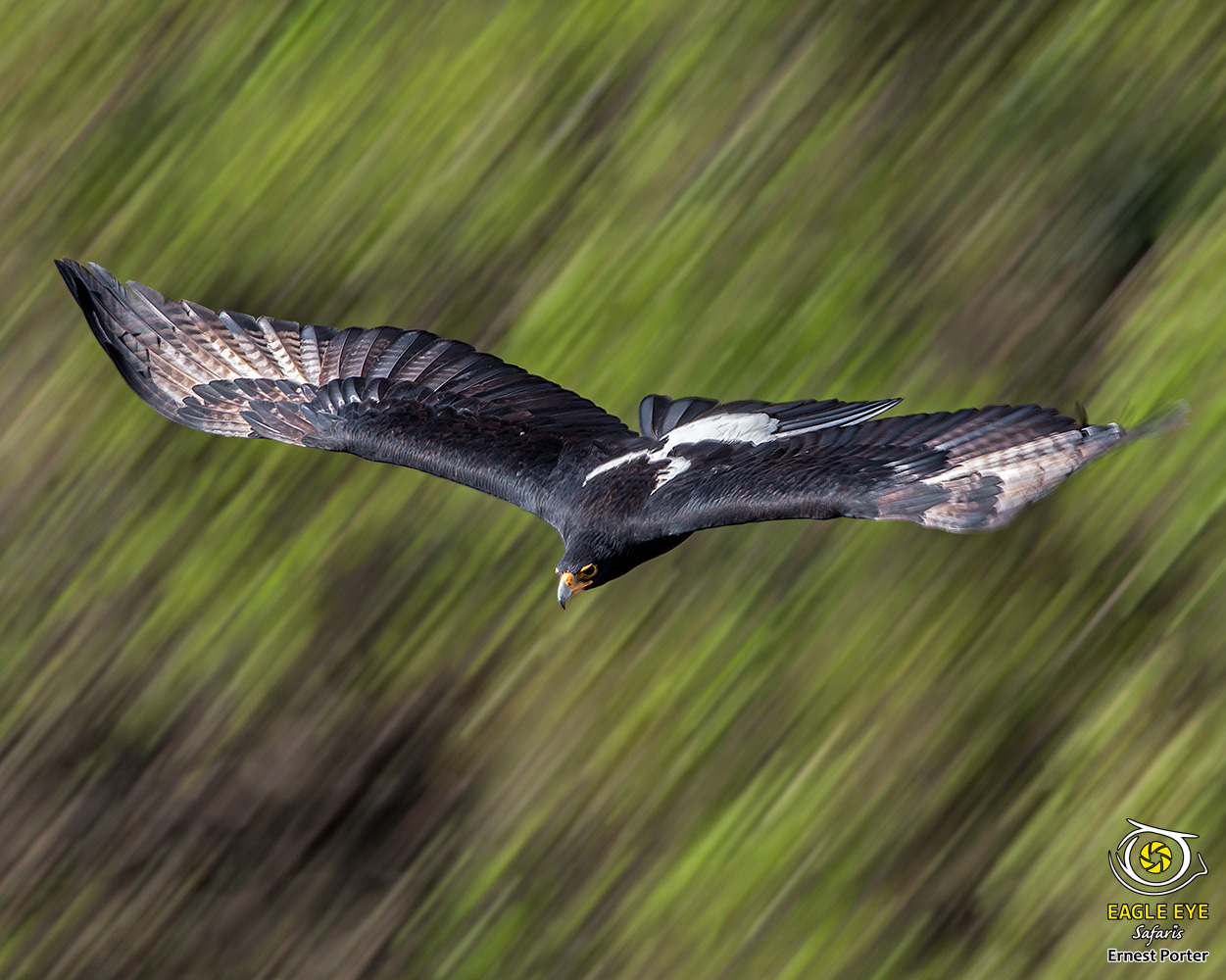 Emoyeni with a Slow Shutter Speed (Verreaux's Eagle)