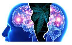 Marijuana, Mental Illness, and Violence