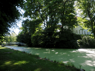 The moat behind the castle, bright green with algae