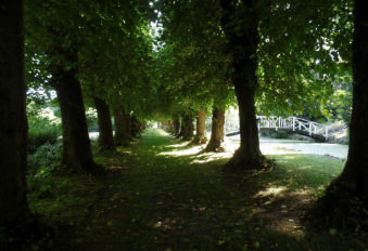 A tree lined path by the moat