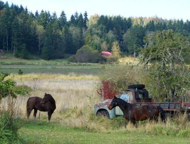 Our neighbor's horses came for a visit